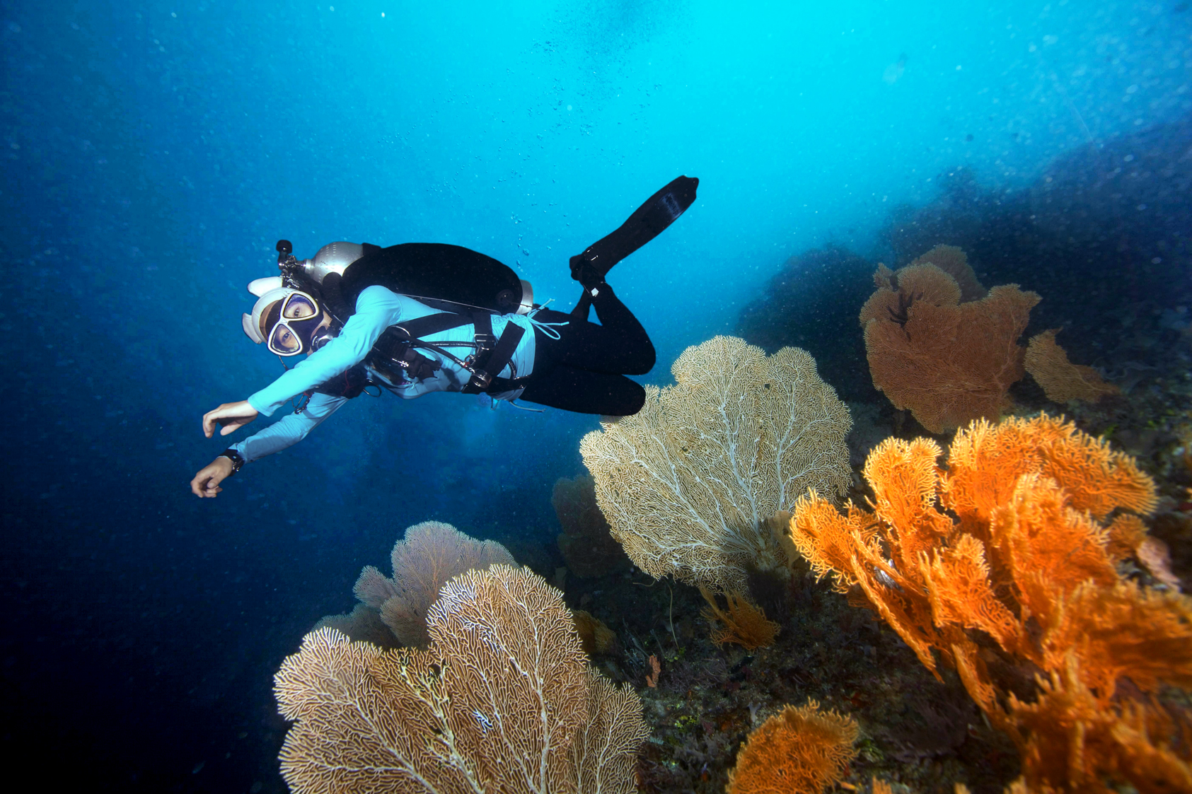 Diver hovering above a reef