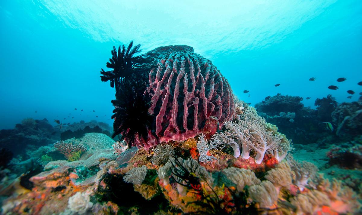 Barrel Sponge