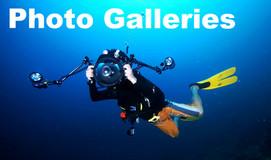 潛水照片來自香港和亞洲其他地區。