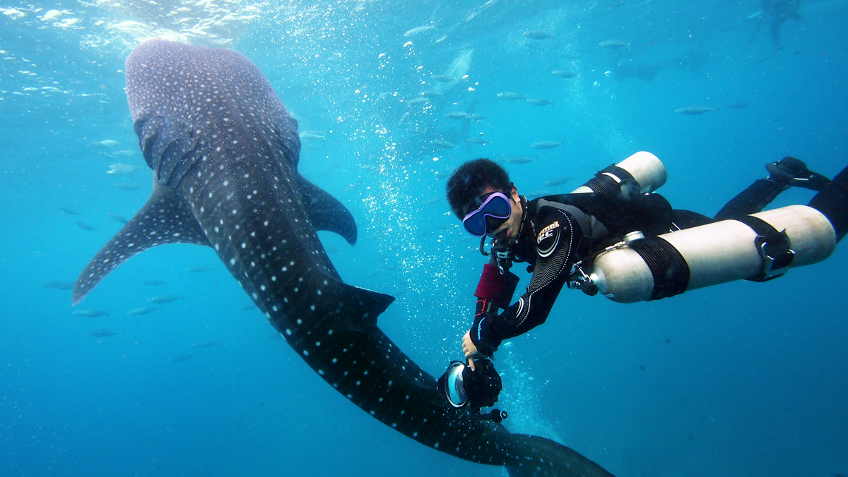 Sidemount diver with whale shark