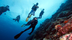 Group of scuba divers on a wall
