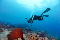 Scuba Diver taking a photo