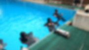 Sidemount training in a swimming pool.