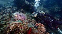 Certified Open Water Diver