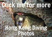 Moray Eel in a hole. Link to Hong Kong scuba diving photos.