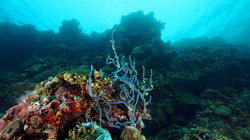 Corals at a green reef