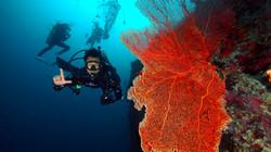 Scuba Diver and Orange Fan Coral