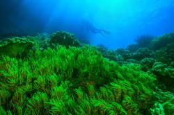 Green reef