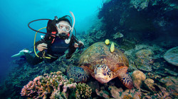 Diver with green turtle