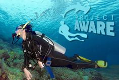 Diver at a reef