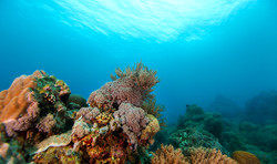 Reef with Corals