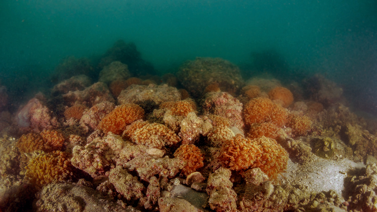 Corals at Sharp Island