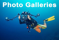 Link to Scuba diving photos from Hong Kong and elsewhere in Asia.
