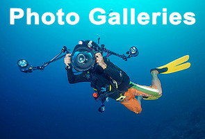 Link to Scuba diving photo galleries