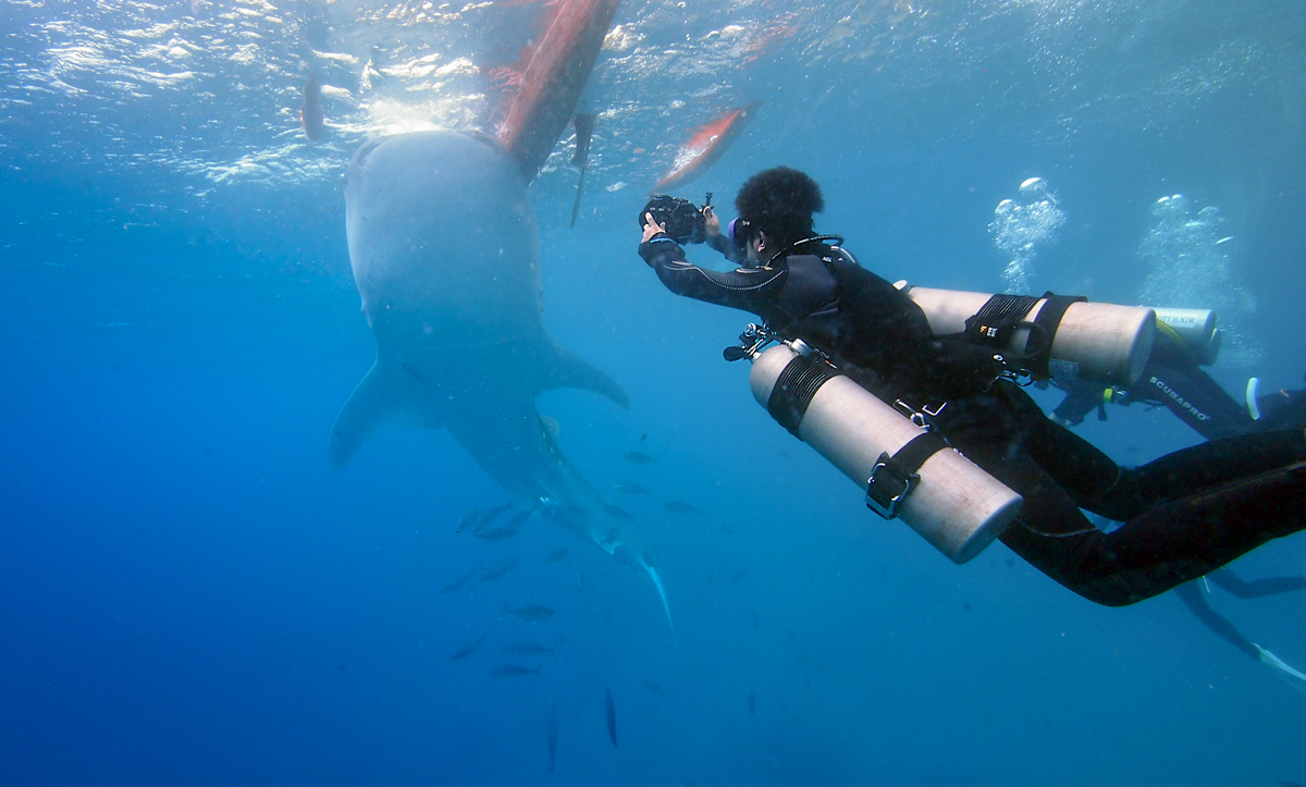 Taking a photo of a whale shark.