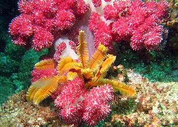 There are over 80 species of coral in Hong Kong waters. Some of the sites offer stunning views for scuba divers.