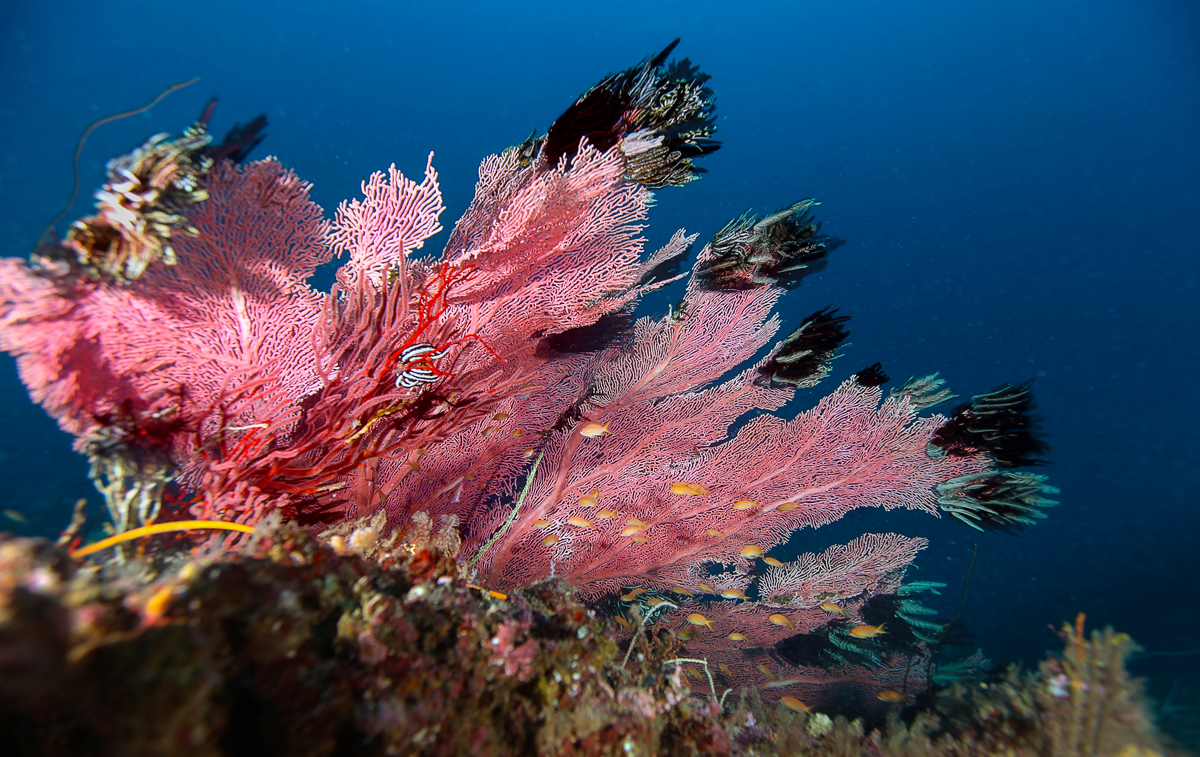 Corals in a Current