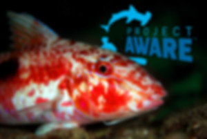 Red Snapper with Project Aware Logo