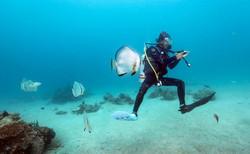 Scuba Diver with Friendly Batfish