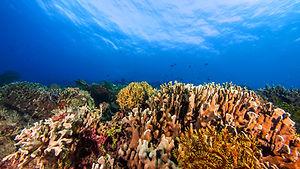 Tropical Reef