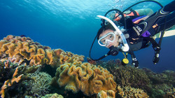 Scuba diver at a shallow reef