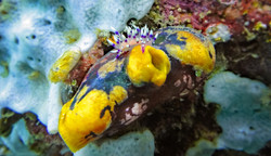 Nudibranch and Sea Squirt