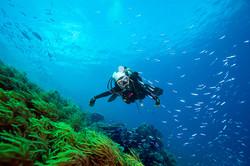 Scuba diver at a green reef