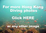 Hong Kong scuba diving photo gallery