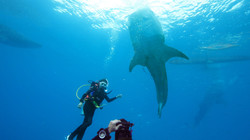 Photo with whale shark