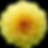 dahlia-2728219_960_720.png
