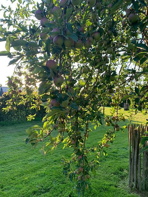 Appelboom.JPG