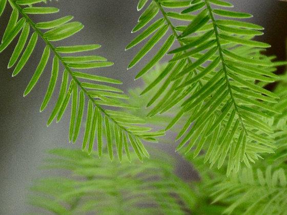 Untitled Green 2607, Avery Island, LA