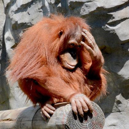 Oh My Gosh, Mom, Audubon Zoo