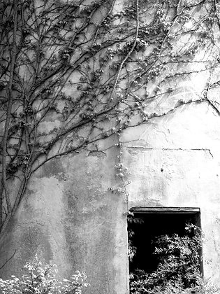 RUINS III, side of the road, TN, even the lost are beautiful