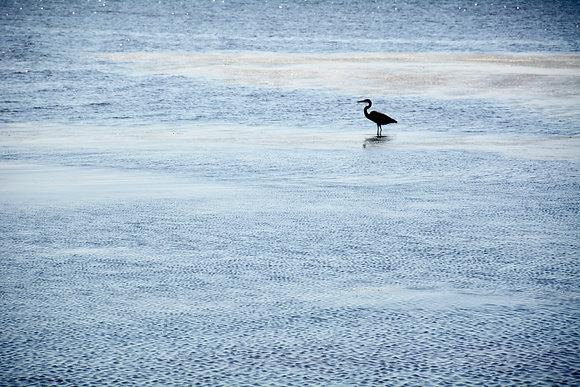 Lake Pontchartrain Egret