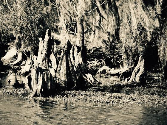 Swamp 1 SEPIA, Tchefuncte River