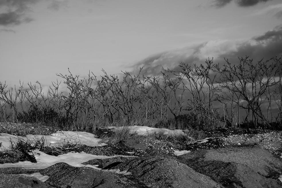 beach orchard 06