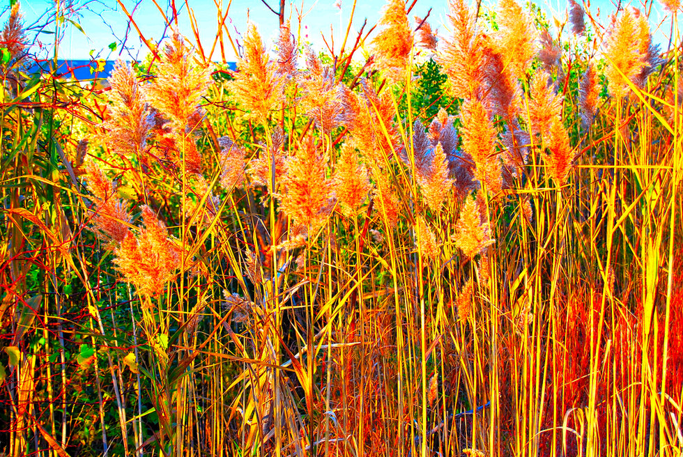Reeds and Sea