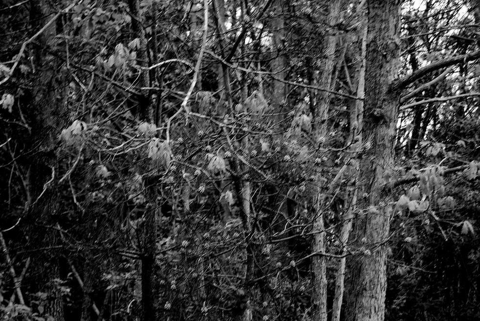 lanterns in black & white 34