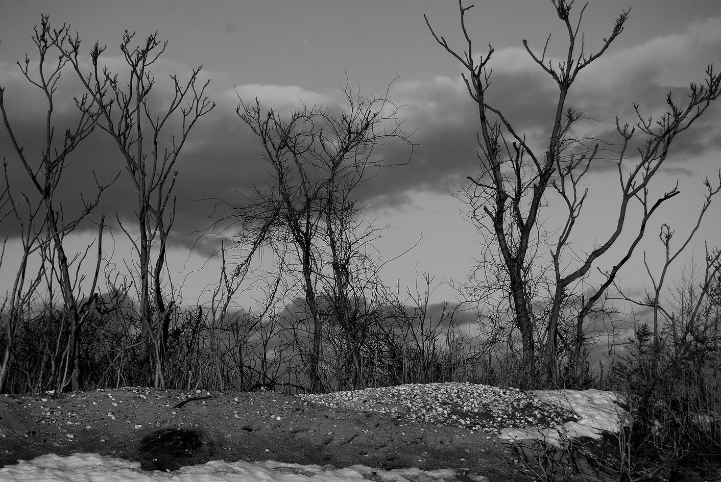 dark trees 05