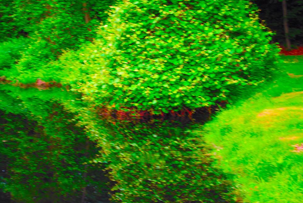 Roosevelt Forest.13