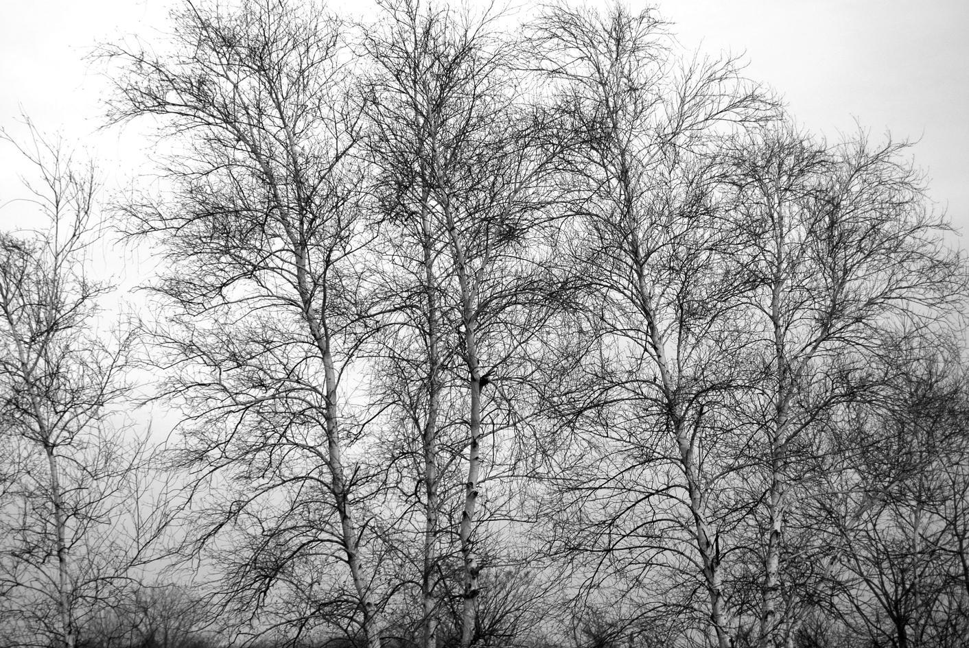 december grey 21