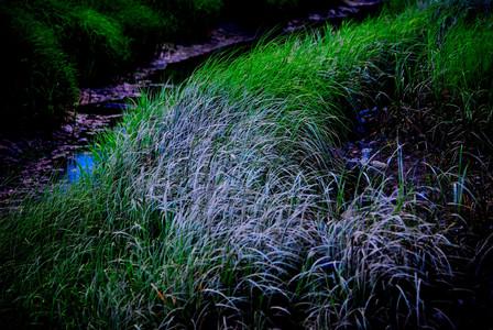 BLUE GRAY.18