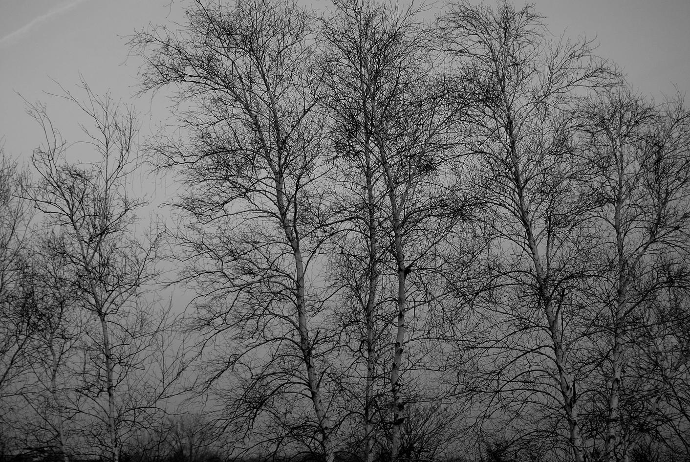 december dusk 77