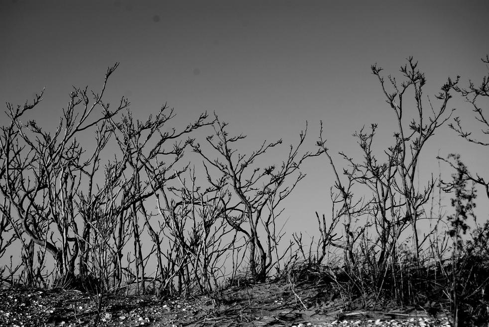 dusk trees 10