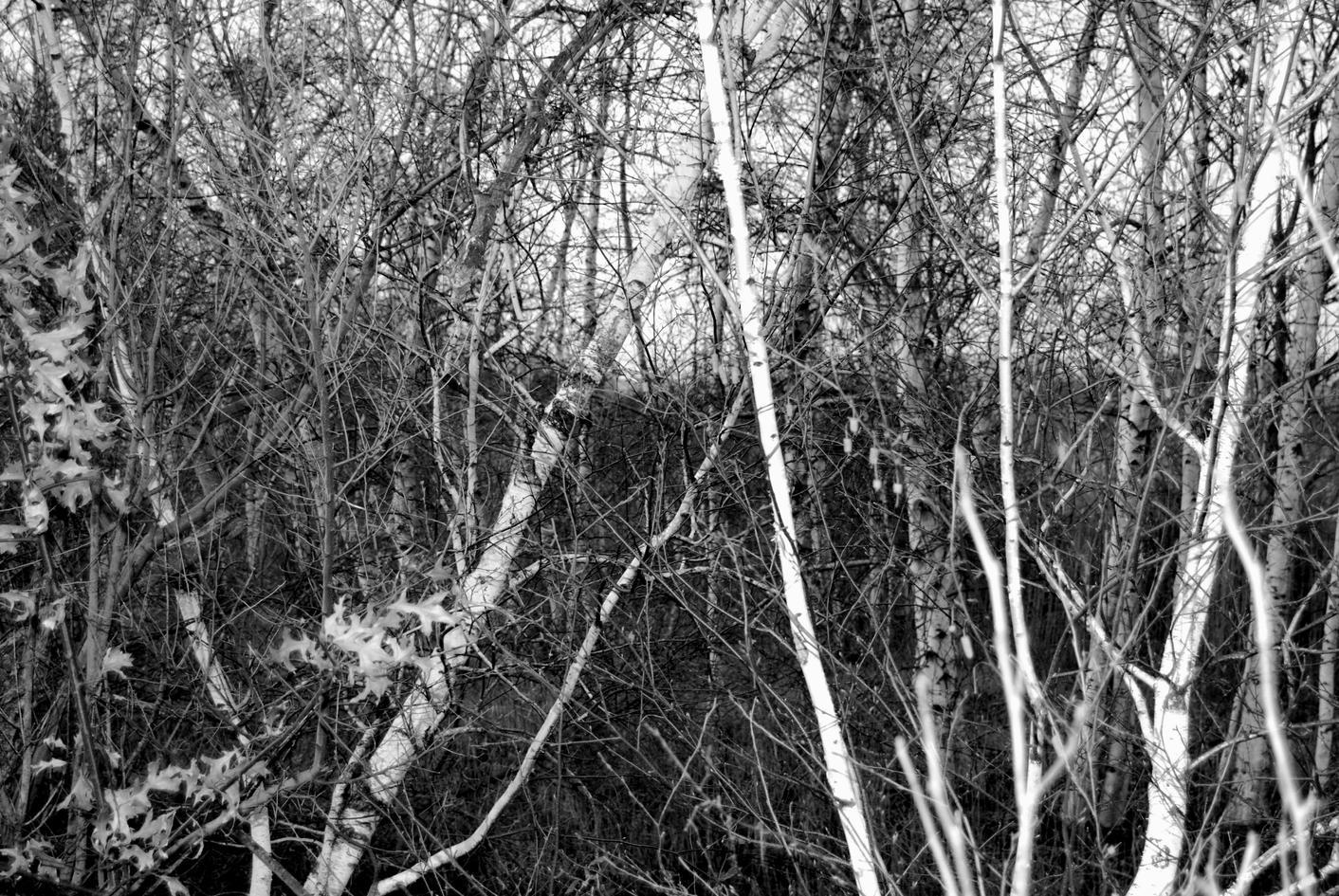 highway birch 39