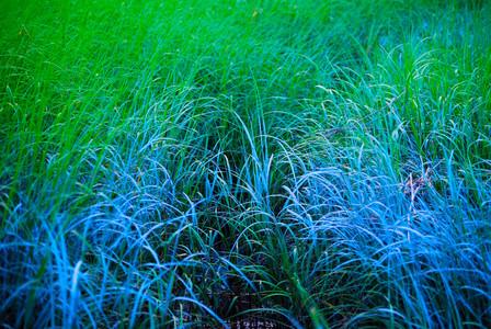 BLUE GRASS.93