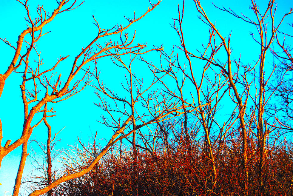 yellow trees 25