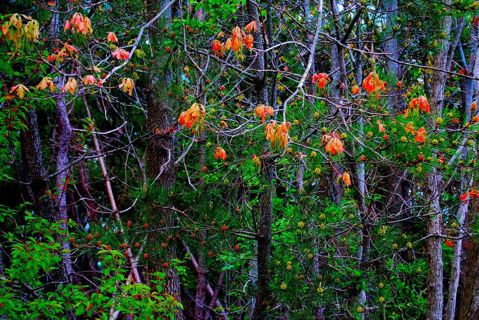 orange lanterns 33