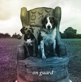 dogs new.jpg